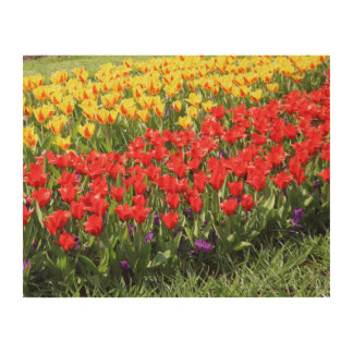 Road of Tulips Wood Print
