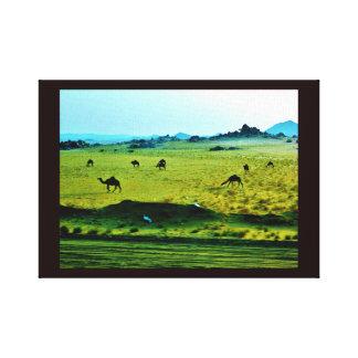 Roadside Camels Canvas Print