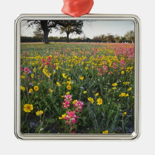 Roadside wildflowers in Texas, spring 3 Christmas Ornaments