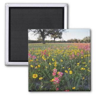 Roadside wildflowers in Texas spring 3 Fridge Magnet