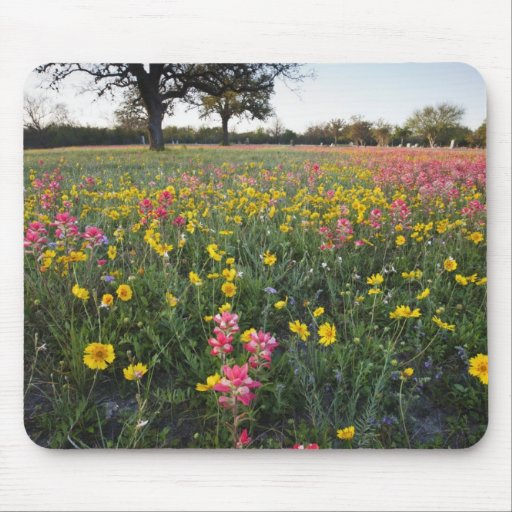 Roadside wildflowers in Texas, spring 3 Mouse Pad