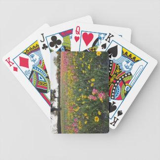 Roadside wildflowers in Texas spring 3 Poker Cards