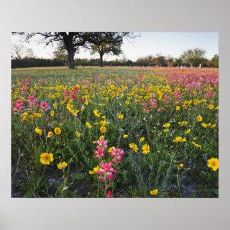 Roadside wildflowers in Texas, spring 3 Poster