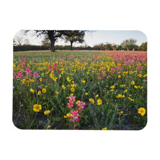 Roadside wildflowers in Texas, spring 3 Rectangle Magnets