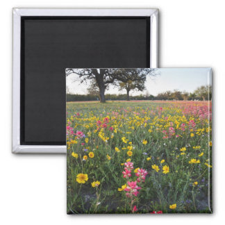 Roadside wildflowers in Texas, spring 3 Square Magnet