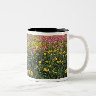 Roadside wildflowers in Texas, spring 3 Two-Tone Coffee Mug