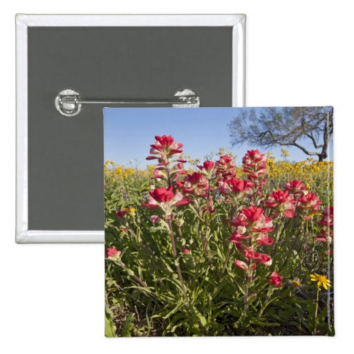 Roadside wildflowers in Texas, spring 4 Pinback Buttons