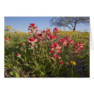 Roadside wildflowers in Texas, spring 4 Card