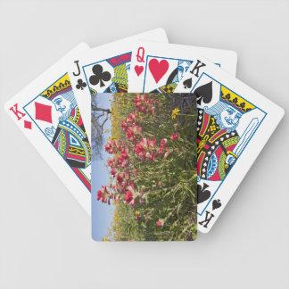 Roadside wildflowers in Texas, spring 4 Card Decks