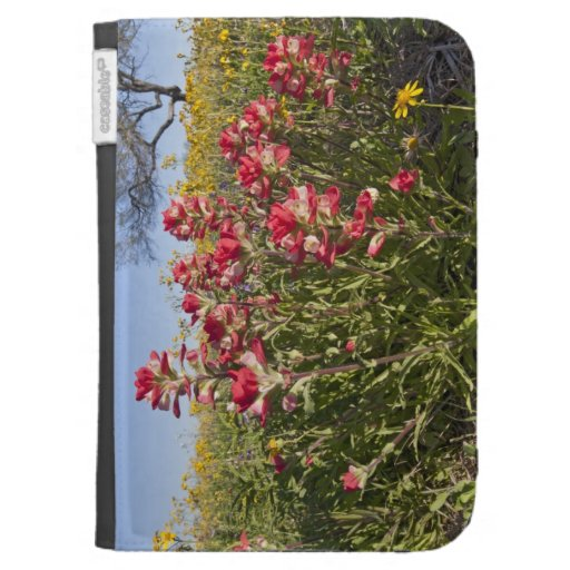 Roadside wildflowers in Texas, spring 4 Kindle Cover