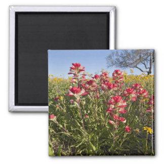 Roadside wildflowers in Texas spring 4 Magnet