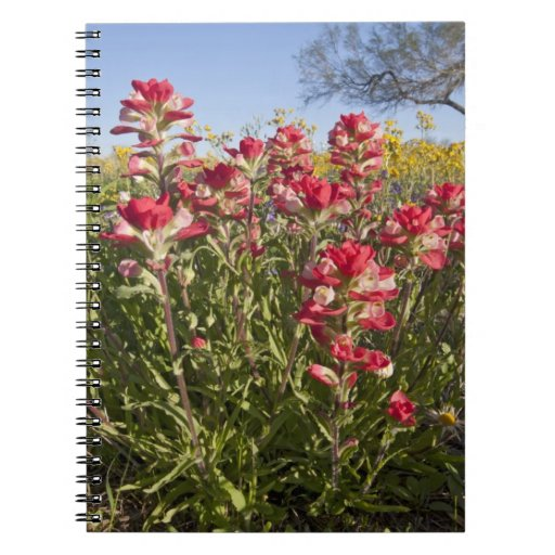 Roadside wildflowers in Texas, spring 4 Note Books