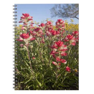 Roadside wildflowers in Texas, spring 4 Notebooks