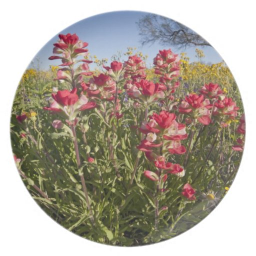 Roadside wildflowers in Texas, spring 4 Party Plates