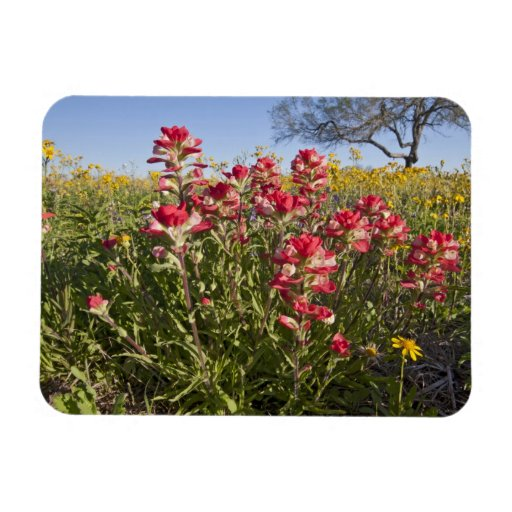 Roadside wildflowers in Texas, spring 4 Rectangular Magnets