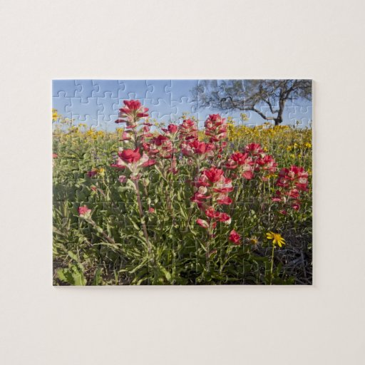 Roadside wildflowers in Texas, spring 4 Jigsaw Puzzles