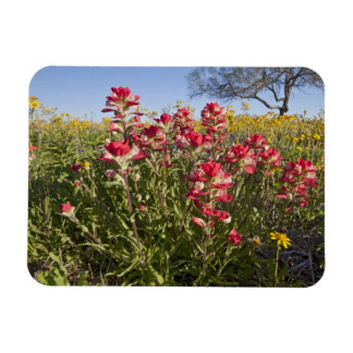 Roadside wildflowers in Texas, spring 4 Rectangular Photo Magnet