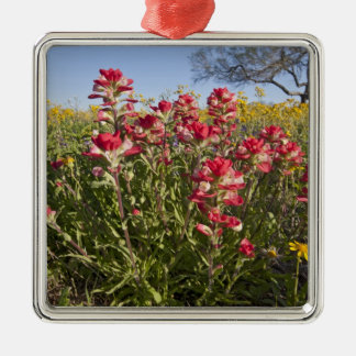 Roadside wildflowers in Texas, spring 4 Silver-Colored Square Decoration