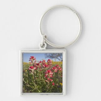 Roadside wildflowers in Texas, spring 4 Silver-Colored Square Key Ring