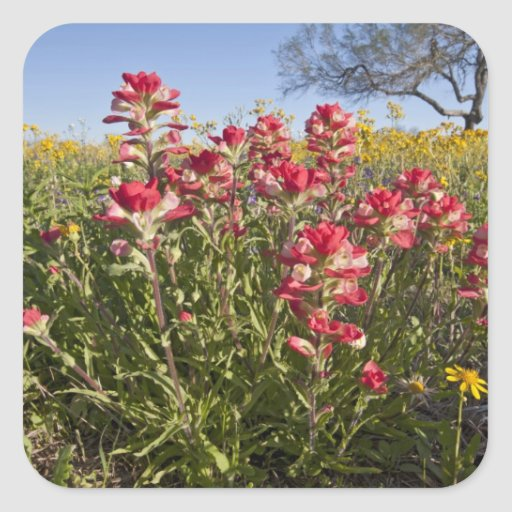 Roadside wildflowers in Texas, spring 4 Square Stickers