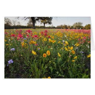 Roadside wildflowers in Texas, spring Card