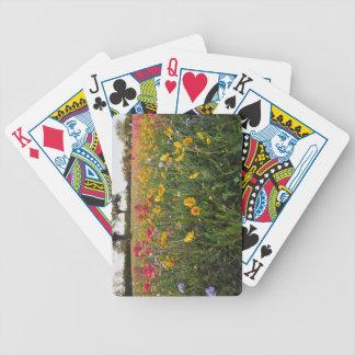 Roadside wildflowers in Texas, spring Card Deck