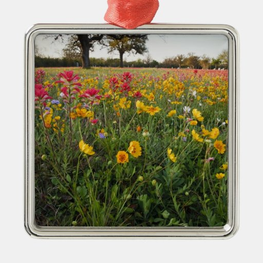 Roadside wildflowers in Texas, spring Christmas Ornaments