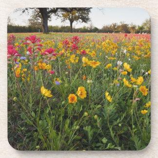 Roadside wildflowers in Texas, spring Drink Coasters