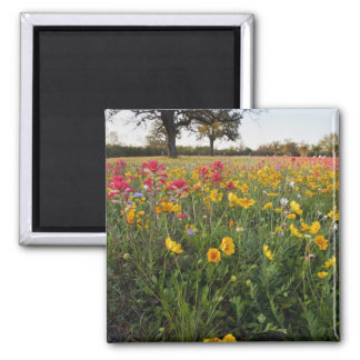Roadside wildflowers in Texas spring Refrigerator Magnet