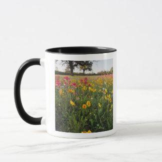Roadside wildflowers in Texas, spring Mug