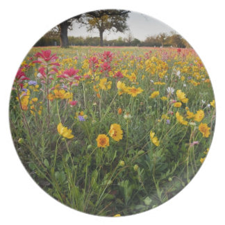 Roadside wildflowers in Texas, spring Party Plates