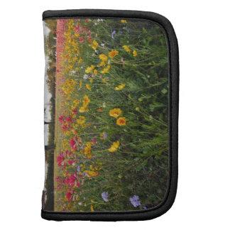 Roadside wildflowers in Texas, spring Organizers