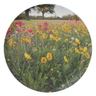 Roadside wildflowers in Texas, spring Plate