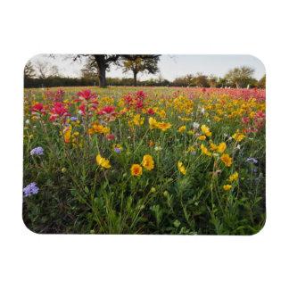 Roadside wildflowers in Texas spring Vinyl Magnets