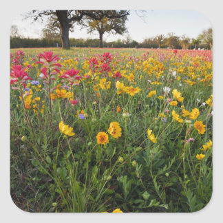 Roadside wildflowers in Texas, spring Square Sticker