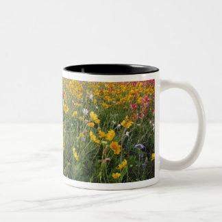 Roadside wildflowers in Texas, spring Two-Tone Mug