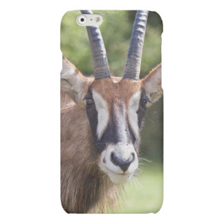 Roan Antelope iPhone 6 Case