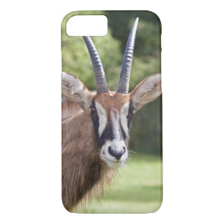 Roan Antelope iPhone 8/7 Case