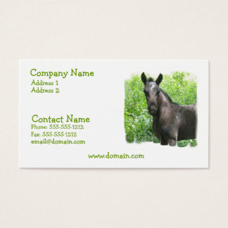 Roan Colt Business Card