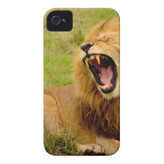 Roaring Lion iPhone 4 Cases