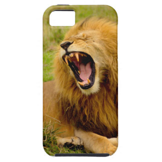 Roaring Lion iPhone 5 Cover