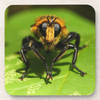Robber Fly Coaster
