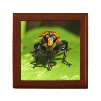 Robber Fly Gift Box
