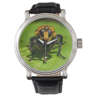 Robber Fly Watch