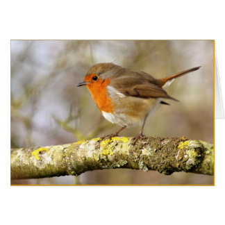 Robin Greeting Cards