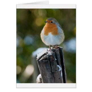Robin Greeting Card