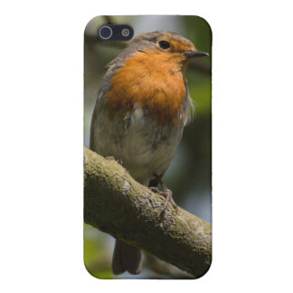 Robin Case For iPhone 5/5S