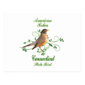 Robin Connecticut State Bird Postcard