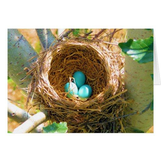 Robin Eggs in a Backyard Tree Nest Card
