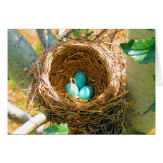 Robin Eggs in a Backyard Tree Nest Greeting Card